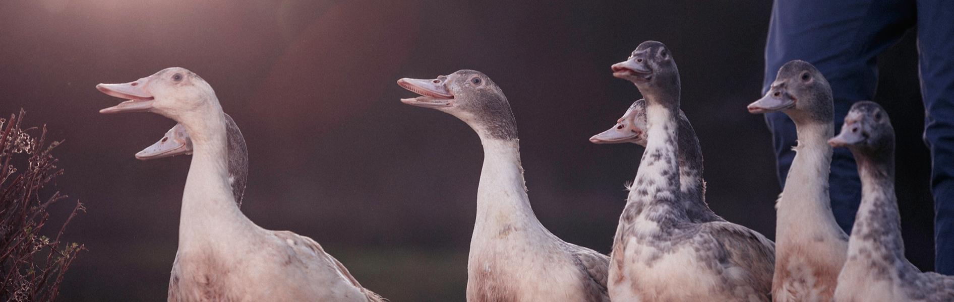 Visites de groupe foie gras