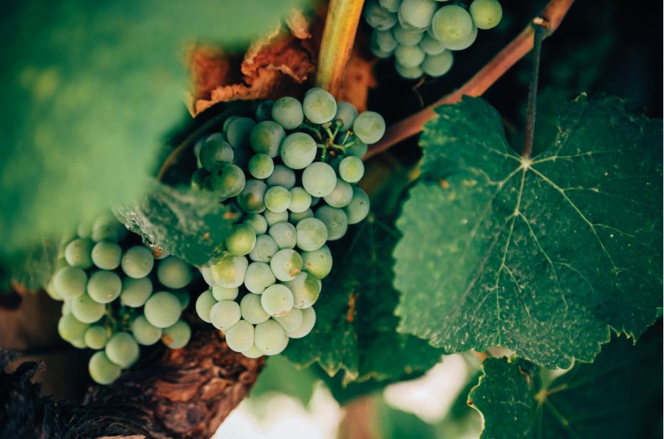 Soirées découvertes Vins et Terroirs d'Alsace Automne-Hiver 2019-2020